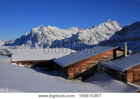 Snow covered mountains Finsteraarhorn and Schreckhorn. Weathered timber facades. Winter landscape in Grindelwald Swiss Alps.
