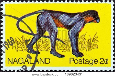 NAGALAND STATE - CIRCA 1969: A stamp printed in India shows a Capped Langur (Trachypithecus pileatus), circa 1969.