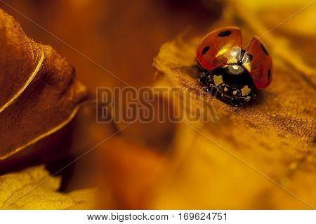 View of lonely ladybird on a leaf