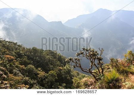 Scenic view of tropical cloud forest in Horton Plains national park, Sri Lanka