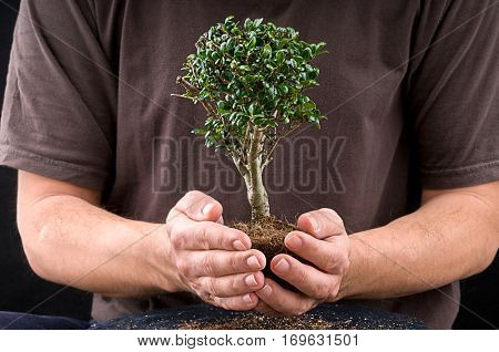 Male hands holding bonsai tree for environmental conservation concept over black background.