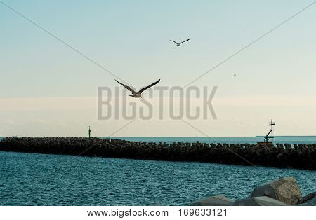 Two seagulls flying to the horizon on the background of the sea and the breakwater.