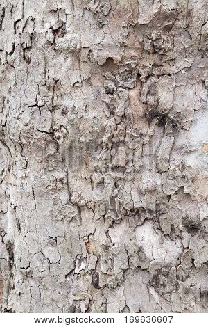 Closeup filling the frame of a old ragged brown tree bark