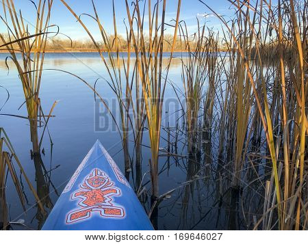 FORT COLLINS  CO, USA - October 31, 2016: Autumn lake paddling - a bow of stand up paddleboard by Starboard heading through reeds to open lake.