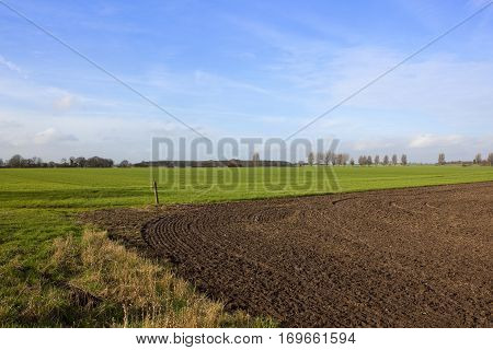 Dry Grasses Plow Soil And Wheat