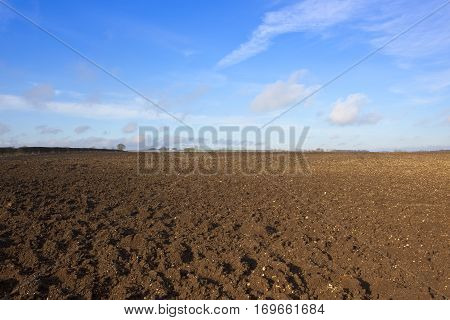 Plowed Earth And Hedgerow