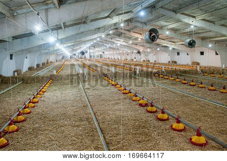 large poultry farm with the special equipment industry