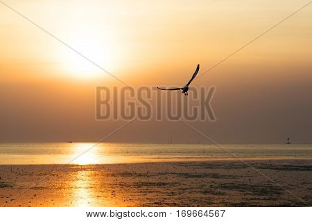 Sunset with birds,bird, Seagull, mangrove, forest, flying, evening,