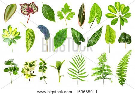 Set of different houseplants leaves on white background