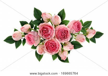 Pink rose flowers and buds arangement isolated on white. Flat lay top view.