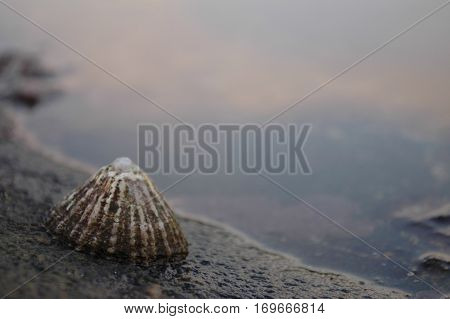 A limpet attached to a rock beside a rock pool at low tide.