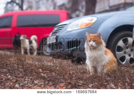 Dogs chasing cat in the yard near cars