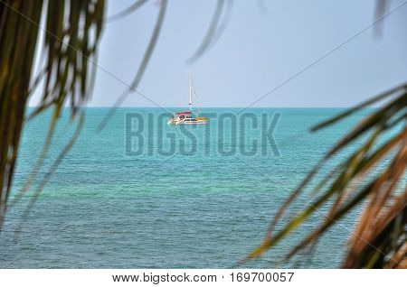 Seaview and a catamaran on the horizon through the palm leaves.