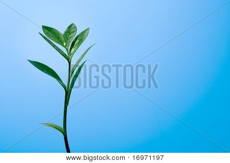 Green plant on a blue background