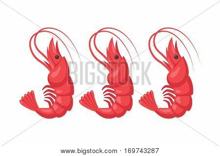 Roasted tails of shrimps dish protein nutrition. Cooked meal fresh gourmet healthy prawn shellfish vector. Crustacean cuisine appetizer snack dinner ingredient.