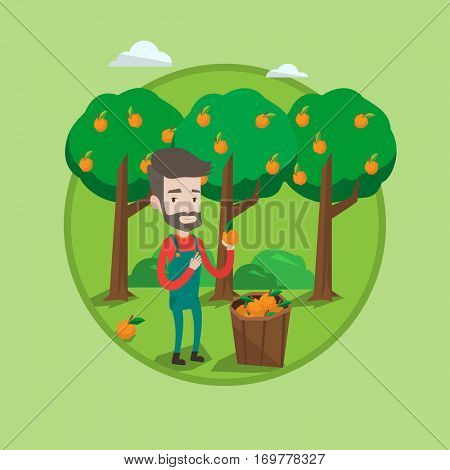 Farmer holding an orange on the background of orange trees. Farmer collecting oranges. Gardener standing near basket with oranges. Vector flat design illustration in the circle isolated on background.