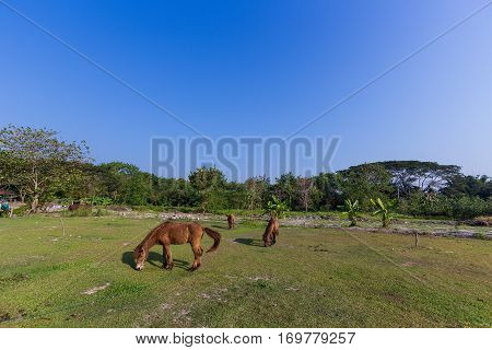 The Horses eating grass in the field