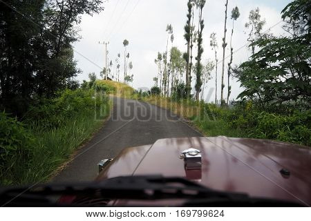 Off road in middle of the big forrest