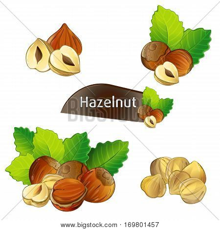 Hazelnut kernel with green leaves isolated on white background vector illustration. Organic food ingredient, traditional vegetarian snack. Hazelnut seed, filbert nut whole and shelled, hazel set.