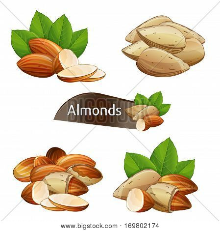 Almond kernel with green leaves set isolated on white background vector illustration. Organic food ingredient, traditional vegetarian snack. Almond nut seed whole and shelled collection.