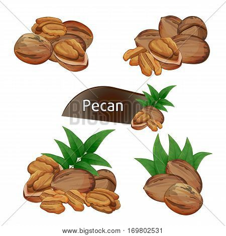 Pecan kernel in nutshell with green leaves set isolated on white background vector illustration. Organic food ingredient, traditional vegetarian snack. Pecan nut seed whole and shelled collection.
