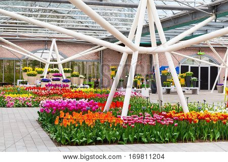 Lisse, Netherlands - April 4, 2016: Colorful tulips flower blossom in pavillion of dutch spring garden Keukenhof, Holland