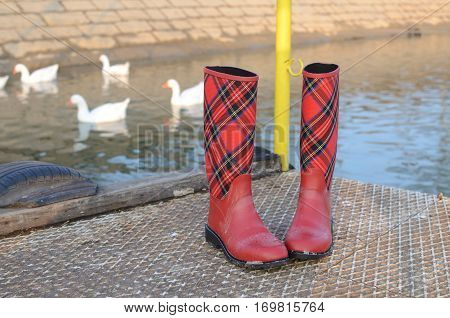Boots And Geese