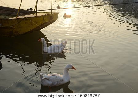 Geese, River And Boat