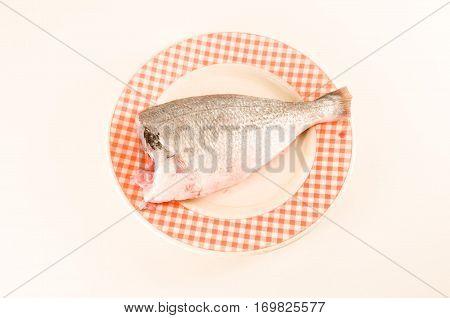 Fresh Dorada Fish Decorated Sea Bream