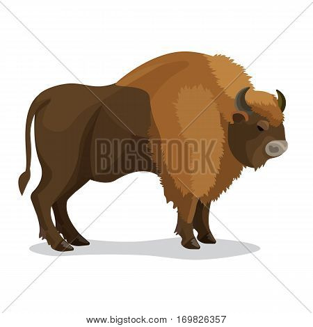 Aurochs animal in brown colour with two horns, small tail isolated on white. Vector illustration of extinct type of large wild cattle that inhabited Europe, Asia, and North Africa in flat style