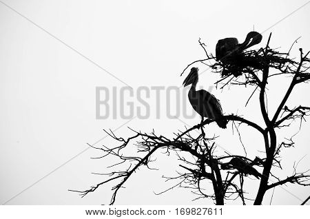 Bird nest with birds on nearby branches isolated