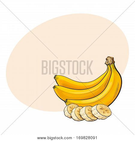 Bunch of three unopened, unpeeled ripe bananas and banana chopped into pieces, sketch style vector illustration with place for text. Realistic hand drawing of ripe banana bunch and slices