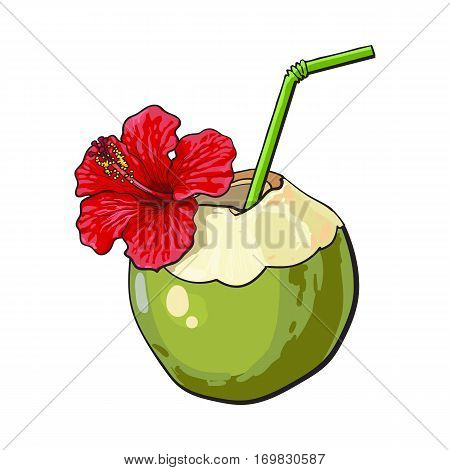 Coconut cocktail, drink decorated with red hibiscus flower, summer vacation attribute, sketch vector illustration isolated on white background. Hand drawn coconut drink, cocktail with straw and flower