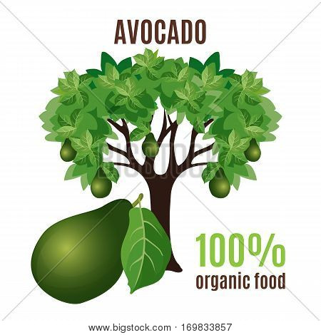Avocado green tree isolated with big avocado fruit below. Vector illustration of fruit avocado