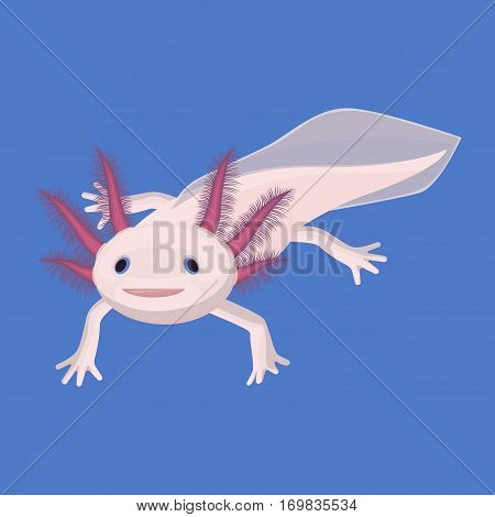 Axolotl pink isolated with four legs. Water animal known as Mexican walking fish with violet hairy six external gills on big oval face. Vector picture of axolotl full length portrait