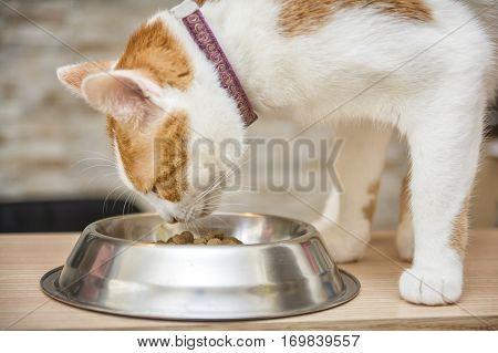 Sweet Ginger Cat Eating From The Bowl