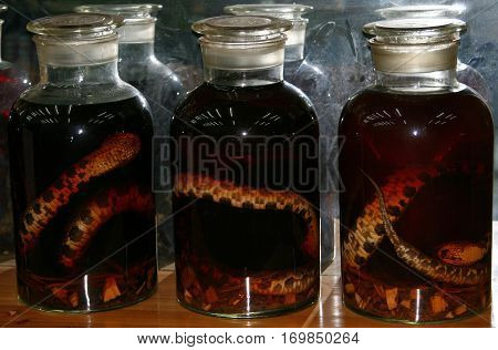 Glass jars with alcohol tincture on poisonous snakes in a small Chinese village shop