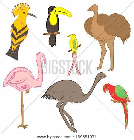 Colorful Hand Drawn Exotic Tropical Birds. Doodle Drawings of Parrot Ostrich Emu Hummingbird Hoopoe and Toucan. Flat Style. Vector Illustration.