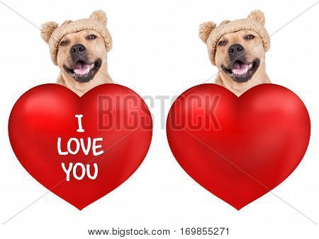 lovely cute dog with big valentine's day heart isolated on white background