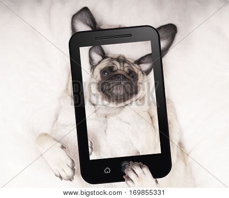 cute pug puppy dog lying on back taking selfie with mobile phone