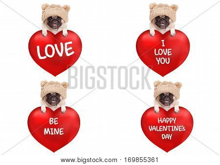 lovely cute pug puppy dog hanging with paws on big valentine's day heart with text isolated on white background