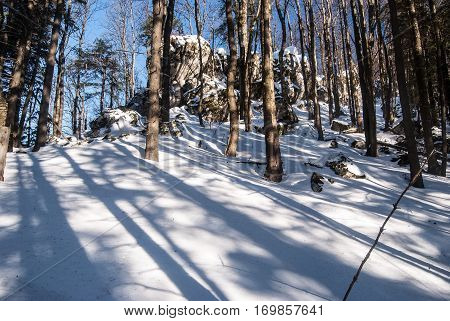 mountain deciduous forest wih rock formation, snow and clear sky bellow Kosiarka hill in Mala Fatra mountains in Slovakia during winter