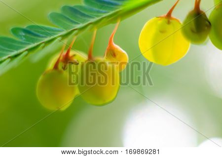 abstract petal dark green background  design, dof, dot,