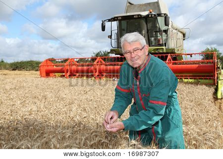 Farmer in wheat field with harvester