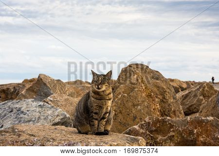 Squinting wild tabby cat posing full face at the sea rocks on an autumn afternoon, Mediterranean
