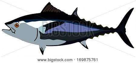 Vector Tuna Fish lives is ocean and under deep blue water life one of top sea predators