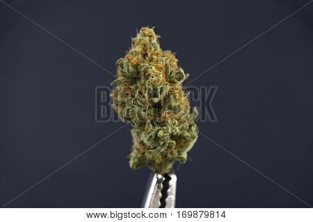 Single cannabis bud (mango puff strain) isolated on dark background - Medical marijuana concept