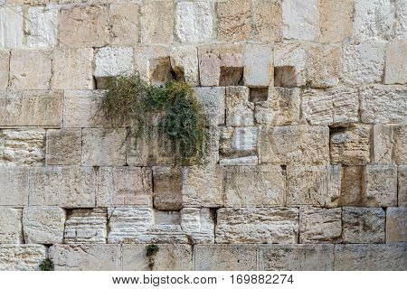 The Western Wall closeup, background of stone wall, Temple Mount in the Old City of Jerusalem, Israel