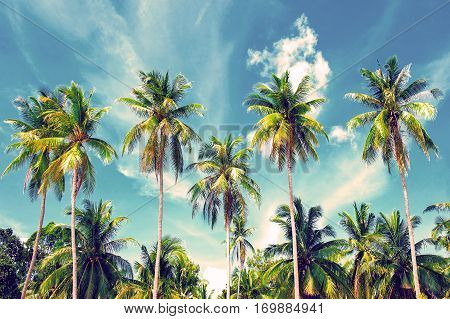 Coconut palm trees perspective view. Beautiful beach. View of nice tropical beach with palms around. Holiday and vacation concept