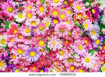 Bright flowers background. A lot of beautiful pink flowers